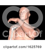 January 19th, 2019: 3D Male Medical Figure With Shoulder Bone Highlighted by KJ Pargeter