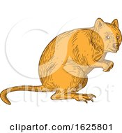 Quokka Drawing Color