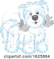 Cute Bichon Havanese Dog