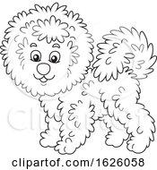 Black And White Bichon Frise Dog