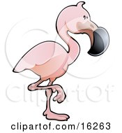 Adorable Pink Flamingo Bird With A Black Beak Standing On One Leg
