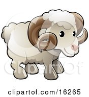 Adorable White Male Sheep A Ram With Brown Curly Horns