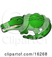 Bright Green Alligator Or Crocodile With His Snout Slightly Open
