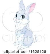 Cute Bunny Rabbit by Pushkin