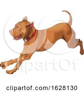 Cute Playful Pit Bull Dog Running