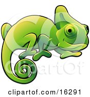 Happy Green Chameleon Lizard With A Curled Tail Clipart Illustration Image by AtStockIllustration #COLLC16291-0021