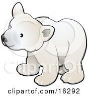Curious White Arctic Polar Bear Cub Ursus Maritimus Clipart Illustration Image by AtStockIllustration