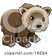 Kodiak Bear Ursus Arctos Middendorffi Brown Bear Ursus Arctos Or Grizzly Bear Ursus Arctos Horribilis Cub Looking Outwards Clipart Illustration Image by AtStockIllustration