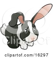 Black And White Dutch Bunny Rabbit With Pink Ears Clipart Illustration Image