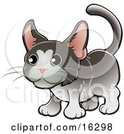 Sweet Gray And White Tuxedo Cat With Pink Ears Clipart Illustration Image