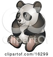 Happy Giant Panda Bear Ailuropoda Melanoleuca Sitting On Its Hind Legs In A Zoo Clipart Illustration Image by AtStockIllustration