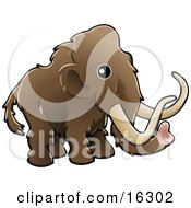 Baby Brown Woolly Mammoth Also Known As The Tundra Mammoth Mammuthus Primigenius With Long Tusks Clipart Illustration Image