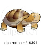 Brown Tortoise With A Dark Shell Clipart Illustration Image