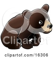 American Black Bear Cub Ursus Americanus Sitting Over A White Background Clipart Illustration Image