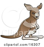 Brown Mother Kangaroo With A Little Baby Joey In Her Pouch Clipart Illustration Image