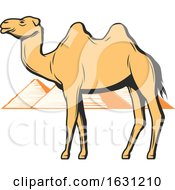 Camel And Egyptian Pyramids