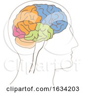 Brain With Colorful Lobes