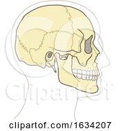 Poster, Art Print Of Human Skull