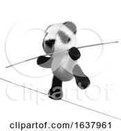3d Panda Tightrope Walker On A White Background by Steve Young