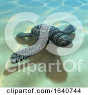 3d Baby Sea Turle