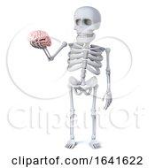 3d Skeleton Has A Brain