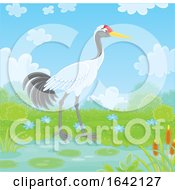 Red Crowned Or Manchurian Crane