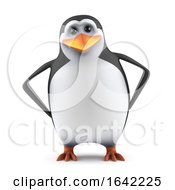 3d Calm Penguin