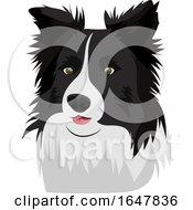 Border Collie Dog Face