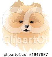 Spitz Dog Face