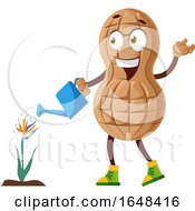 Cartoon Peanut Mascot Character Watering A Flower by Morphart Creations