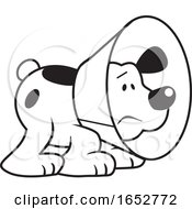 Cartoon Black And White Dog Wearing An E Collar