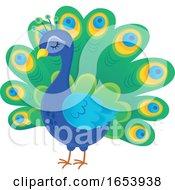 Cute Peacock Bird