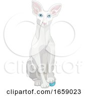 Cute White Oriental Shorthair Cat Resting A Paw On A Toy