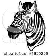 Black And White Zebra Head