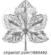 Poster, Art Print Of Grape Leaf Design Element Woodcut Engraving Style