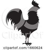 Silhouetted Rooster