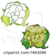 Fresh Broccoflower by Morphart Creations