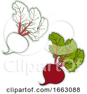Poster, Art Print Of Fresh Beetroot