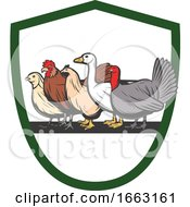 Poster, Art Print Of Chickens Goose And Turkey