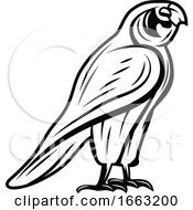 Black And White Egyptian Falcon