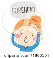 Kid Girl Naming Body Parts Forehead Illustration