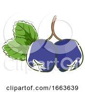 Acai Berry Superfood Illustration