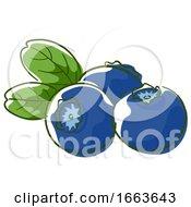Blueberry Superfood Illustration