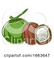 Coconut Superfood Illustration