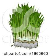 Wheatgrass Superfood Illustration