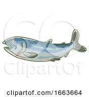 Wild Salmon Superfood Illustration