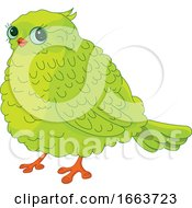 Cute Chubby Green Bird