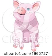 Cute Blue Eyed Pig