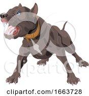 Poster, Art Print Of Angry Pit Bull Dog