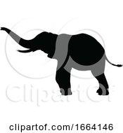08/29/2019 - Elephant Silhouette